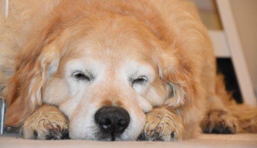 愛犬を安楽死させた同僚の涙