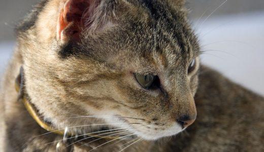 オーストラリア:半外飼いの猫たち