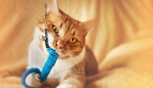 猫に「猫の毛皮のおもちゃ」を与えているかもしれない恐怖