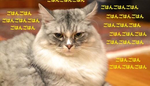 考える猫。