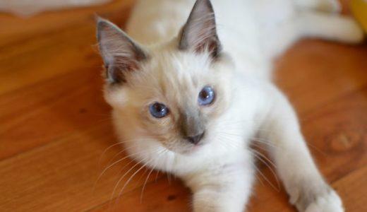猫ヘルペスウイルス感染症に完治はないらしい