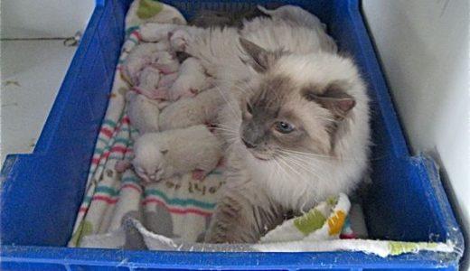 生後3日目の仔猫たち