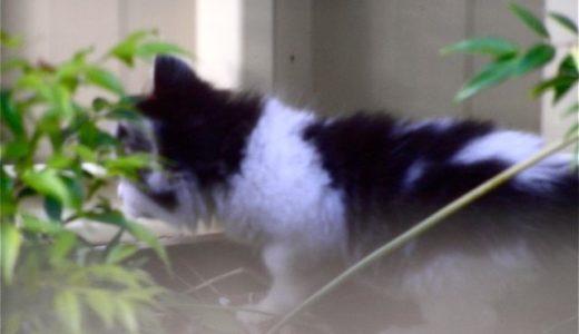 裏庭の野良猫母子 その7「建前なのか」