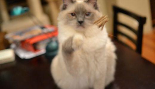 キャットダンサー:お猫サマはヘンなものが大好き