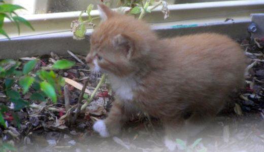 裏庭の野良猫母子 その1「出現」