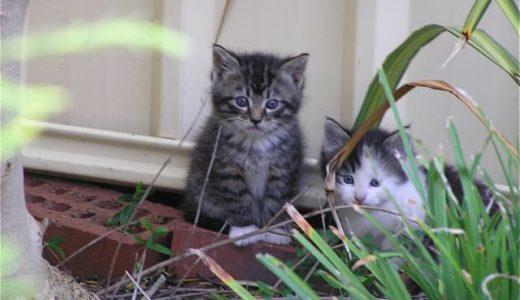 裏庭の野良猫母子 その2「仔猫たち」
