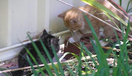 裏庭の野良猫母子 その4「ヘルプ」