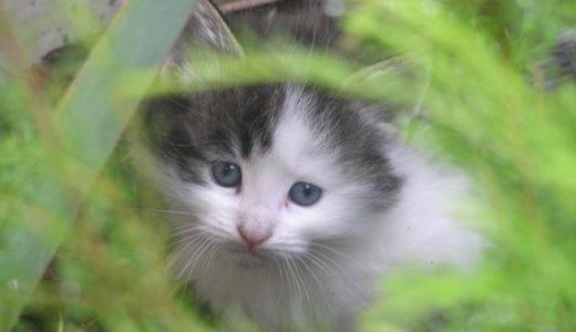 裏庭の野良猫母子 その3「住処」