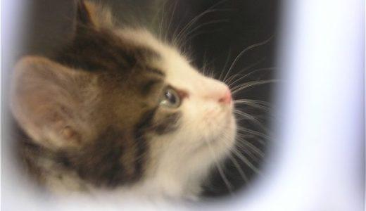 裏庭の野良猫母子 その8「仔猫捕獲」