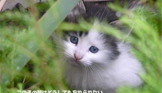裏庭の野良猫母子 その11「その後」