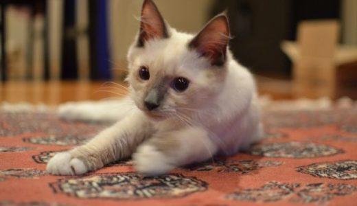 西オーストラリア州の画期的なネコ法案を考える
