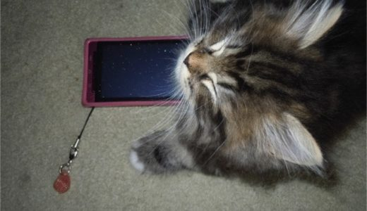 ノルチラ仔猫のおテテで最後を飾る +優しいオマケ