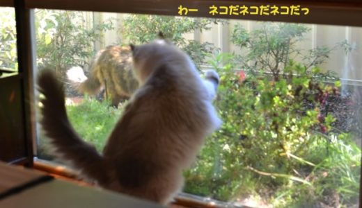 突然、庭に猫が来た!