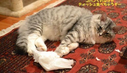 すーちゃん、猫ヘルペス感染症再発