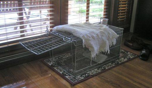 裏庭の野良猫母子 その5「罠を借りる」