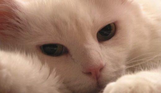 「忘れないよ」と、家族だった猫につぶやく