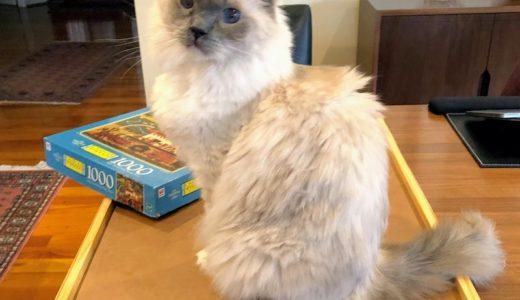 猫にジャマされながら1000ピースのジグゾーパズルを完成させる話。