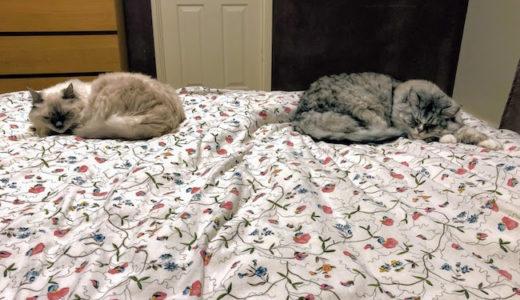 寝るときはみんな一緒に同じカッコで…