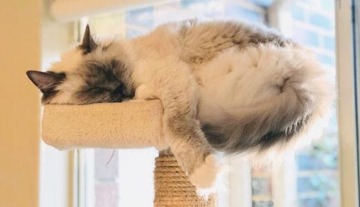 こんな高いところでもぐっすりと寝られるってスゴイ。