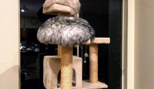この「帽子」がどうやったら猫に見えるというのだ。