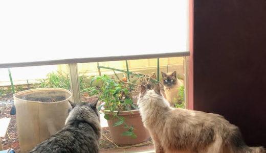 毎日あいちゃんとすーちゃんに挨拶しに来るのは隣家の半外飼い猫だ