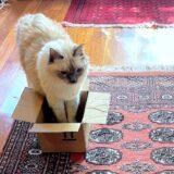 あいちゃんは小さな箱にも入ってみたい…